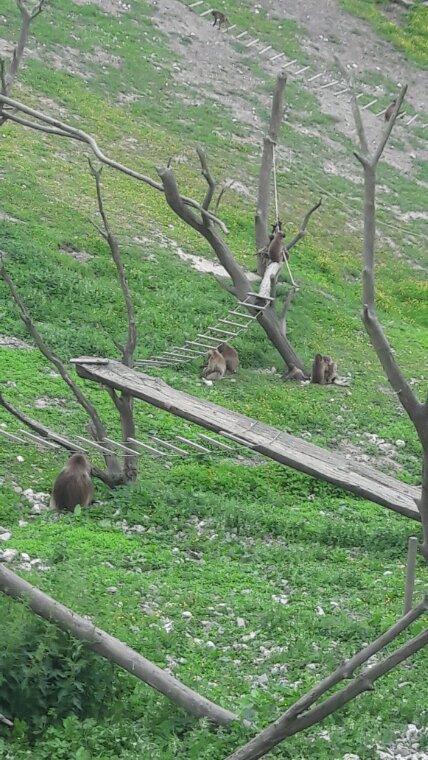 Zoo de cerza