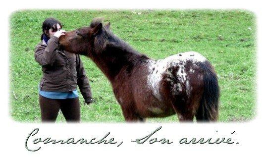 L'intégration de Comanche