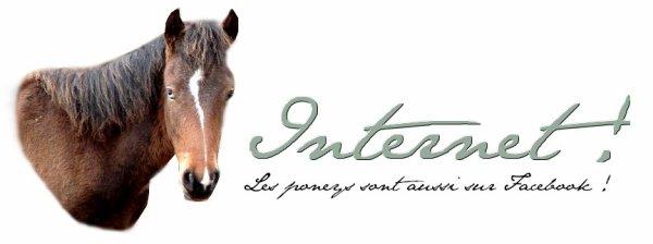 Les poneys sur le net !