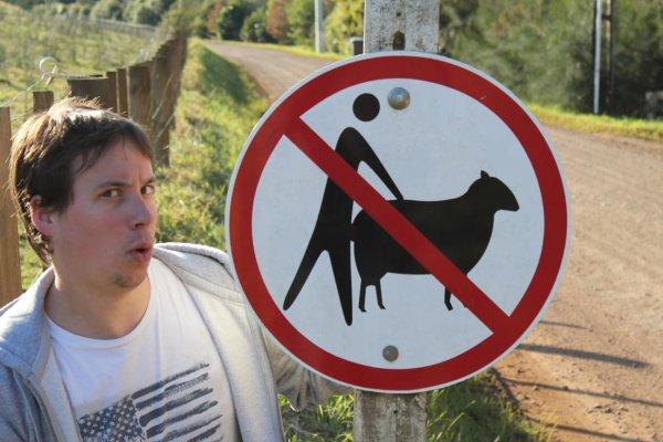 Un violeur de moutons recherché en Suède