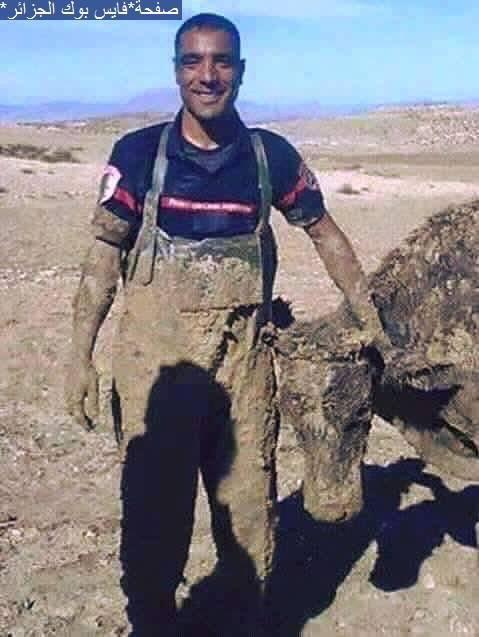 Algérien sauvé protéger le veau des morts après avoir noyé dans la boue