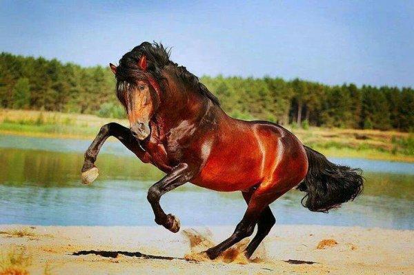 C'est dans la légèreté que repose l'équitation savante ! ♥