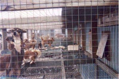 STOP les usines à chiots