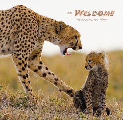 Bienvenu sur le blog de l'Association Défence Animalière (ADA)