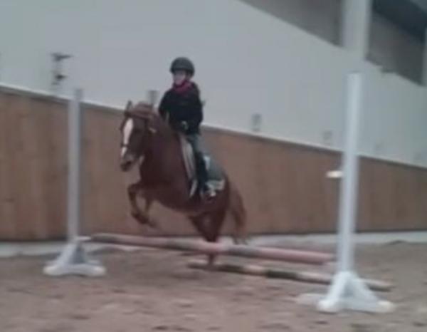 Mon parcours en équitation...