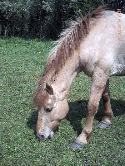 photo de mon cheval que j'adore