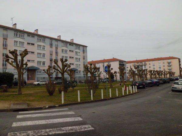chantier d'élagage pour l'OPH à Rochefort