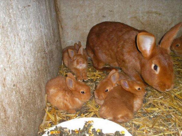 mon lapin et ses petits