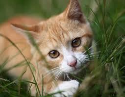 J'aimerais être un chat !