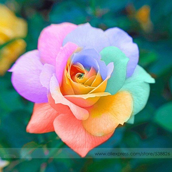 Florzinha dulcinea
