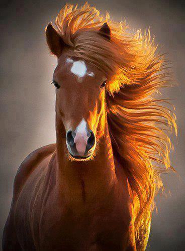 Plusieurs centre equestre et poneys club!