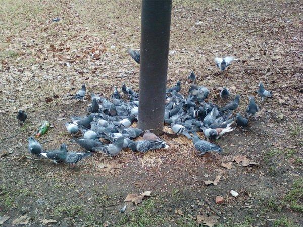 Les pigeonnier: