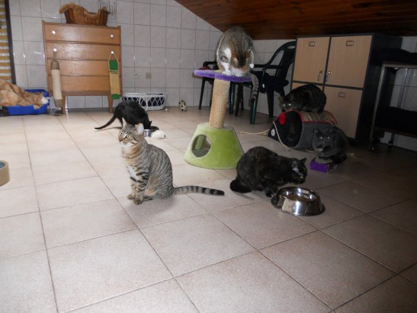 Les chats de l'association :