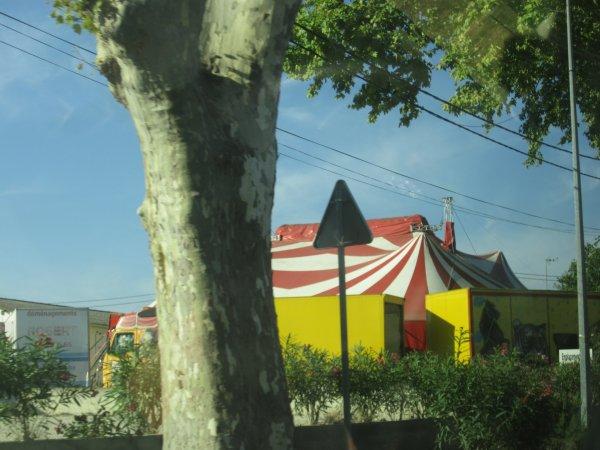 mini reportage sur le cirque H. Zavatta