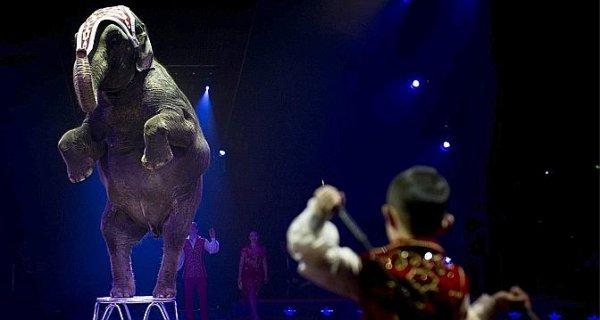 Knie met ses éléphants au placard !
