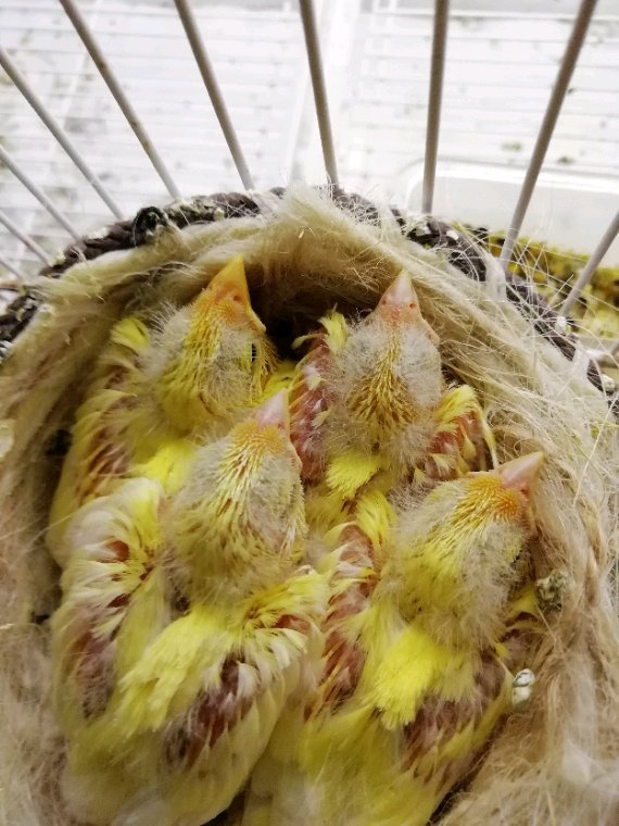 Un bonito nido