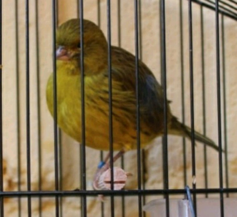 Ornitología Burillo