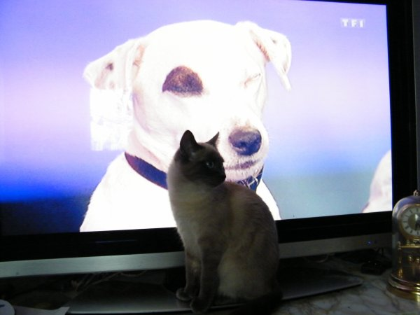 Combien vaut mon chat natdequiberon for Combien vaut 1 are en m2