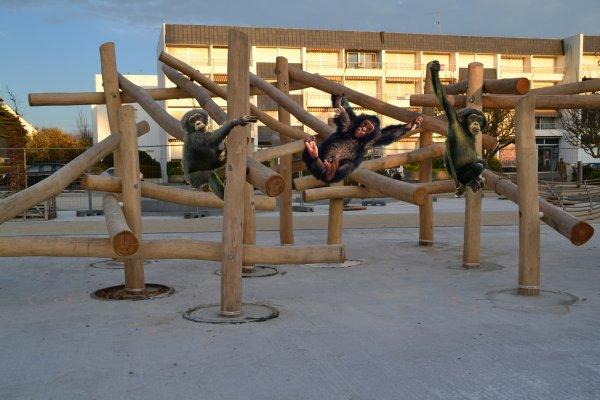 Une structure acrobatique pour chimpanzés au jardin de brétinio
