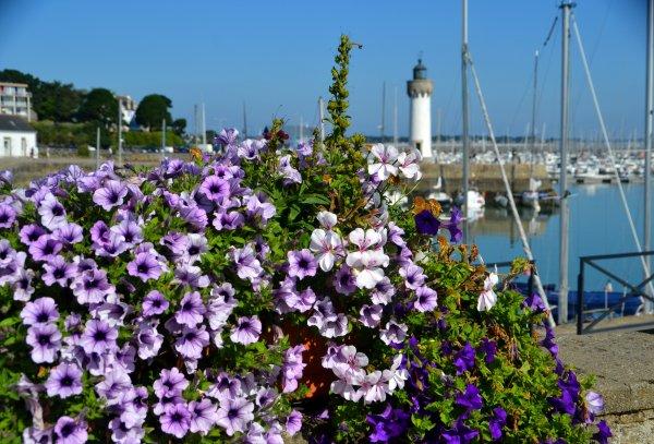 Port haliguen 22 juillet