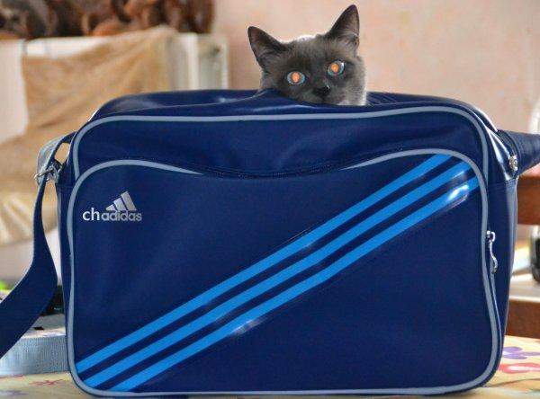 Mon nouveau sac CHADIDAS ! :)