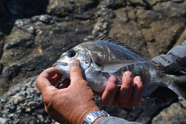 Petite partie de pêche avec richard  17 mai