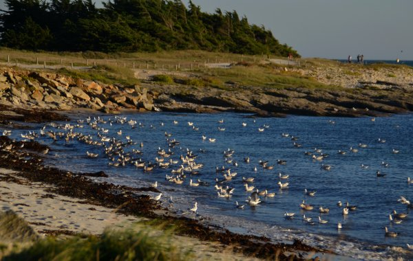 Marée haute à port haliguen et conguel 29 sept