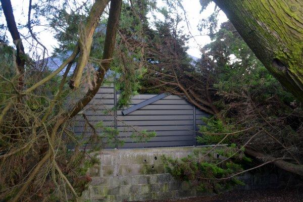 hier soir (4 nov)aux hlm de la lande l'arbre de mon enfance s'est effondré..