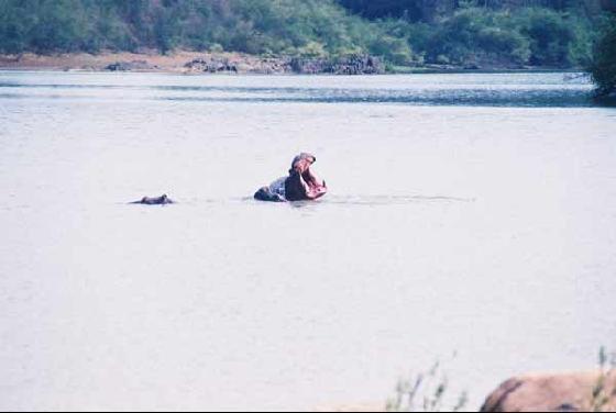 La fleuve gambie
