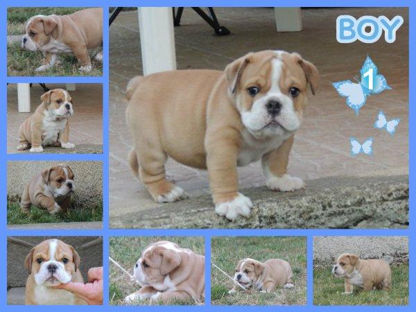 Les bébés de Fat Boy 1 mois et demi