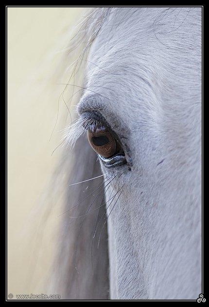 Site officiel des chevaux