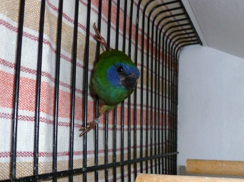 Observation de ses oiseaux