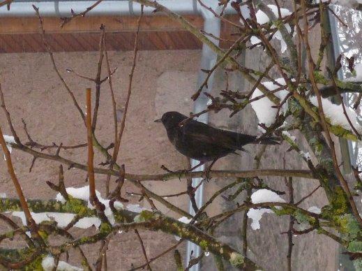 Observation des oiseaux