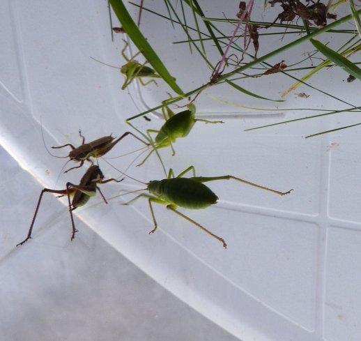 Les insectes indigènes