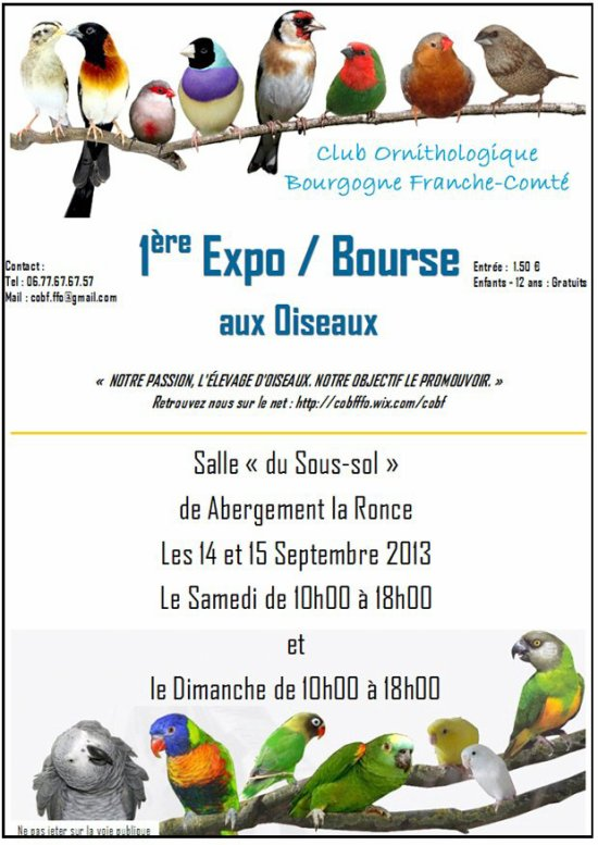 - EXPOSITION -