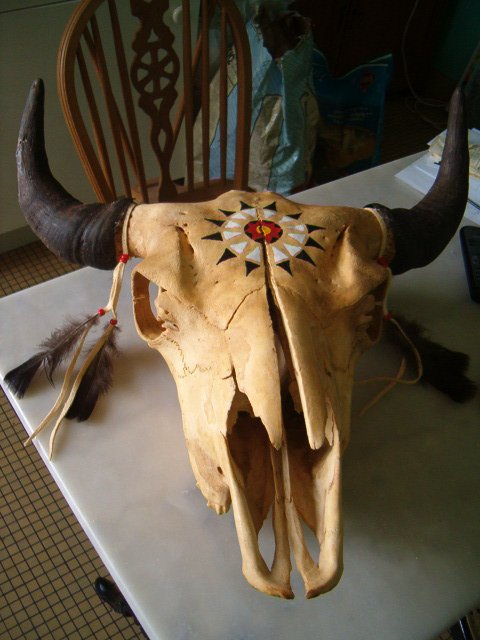 Crane De Bison A Vendre décoration de mon crâne de bison (tatanka natáhu mitawa kin wíyun