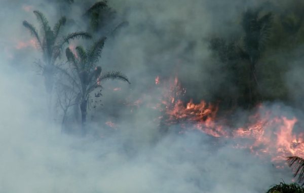 Brésil : les autorités restent impassibles devant les incendies criminels qui menacent les Indiens