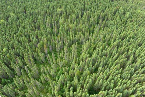 Québec sommé de protéger la forêt Broadback
