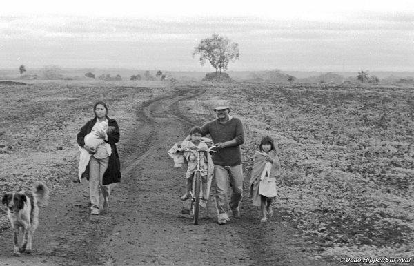 Le suicide des Guarani – Comment la séparation entre l'homme et la nature peut affecter le psychisme