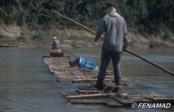 Pérou : des bûcherons illégaux expulsés du territoire des Indiens isolés isconahua