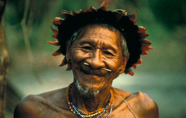 Brésil : bonne nouvelle pour les Arara !