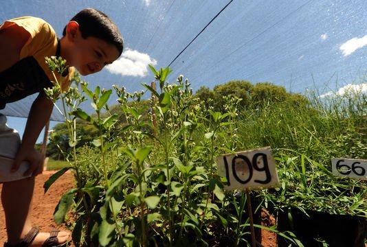 La stevia au c½ur d'un scandale de biopiraterie