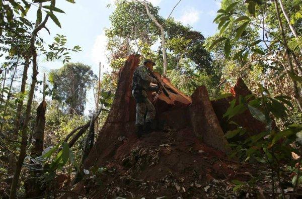 ALERTE : LA CHAMBRE DES DÉPUTÉS BRÉSILIENNE A APPROUVÉ L'EXPLOITATION D'UNE PARTIE DE LA FORÊT AMAZONIENNE, ÉQUIVALENT À 3 FOIS LA VILLE DE SÃO PAULO