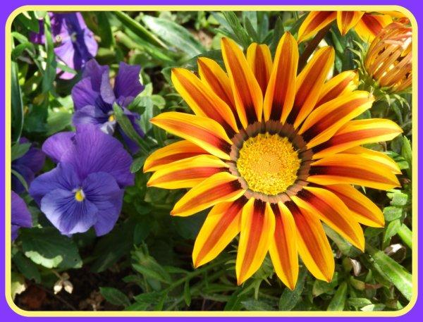 Fleur du jour !