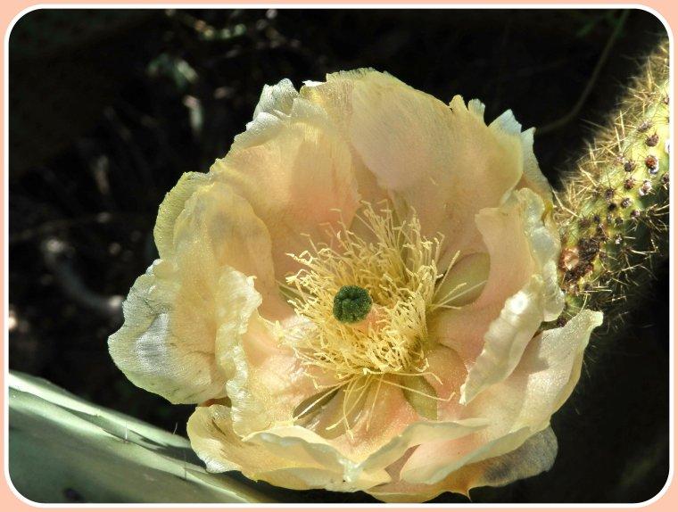 Fleurs du jour ! Délicates comme de la soie !
