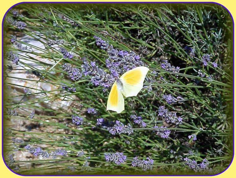 Papillon du jour !