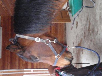5. Présente ton cheval