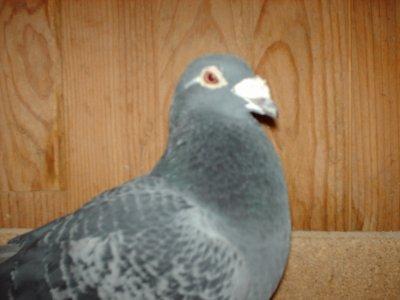 mon premier de nevers demi fond avesnois en 2004