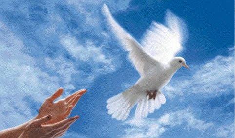 Colombe de la paix, une paix prr de souhaits...