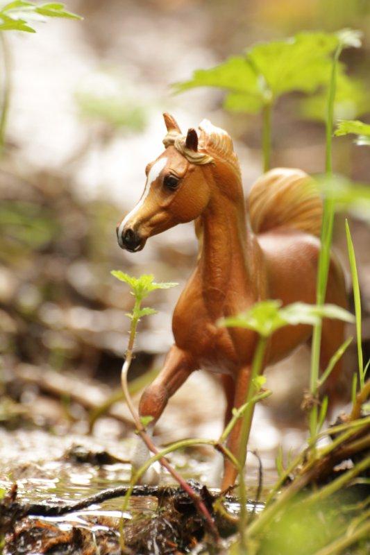 Eau et chevaux [24/07/16]